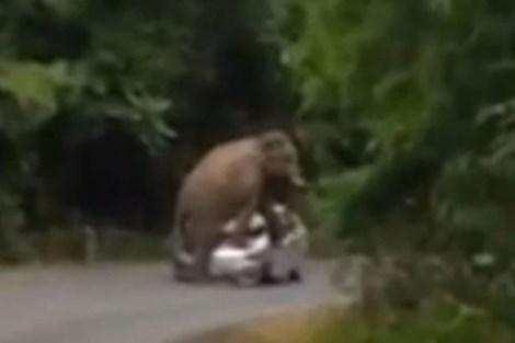 Ngỡ ngàng chú voi xông ra đường, nhảy lên nóc xe ôtô  - Ảnh 3