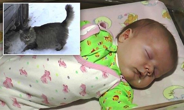 """Cảm động mèo hoang """"cứu sống"""" em bé bị bỏ rơi - Ảnh 1"""