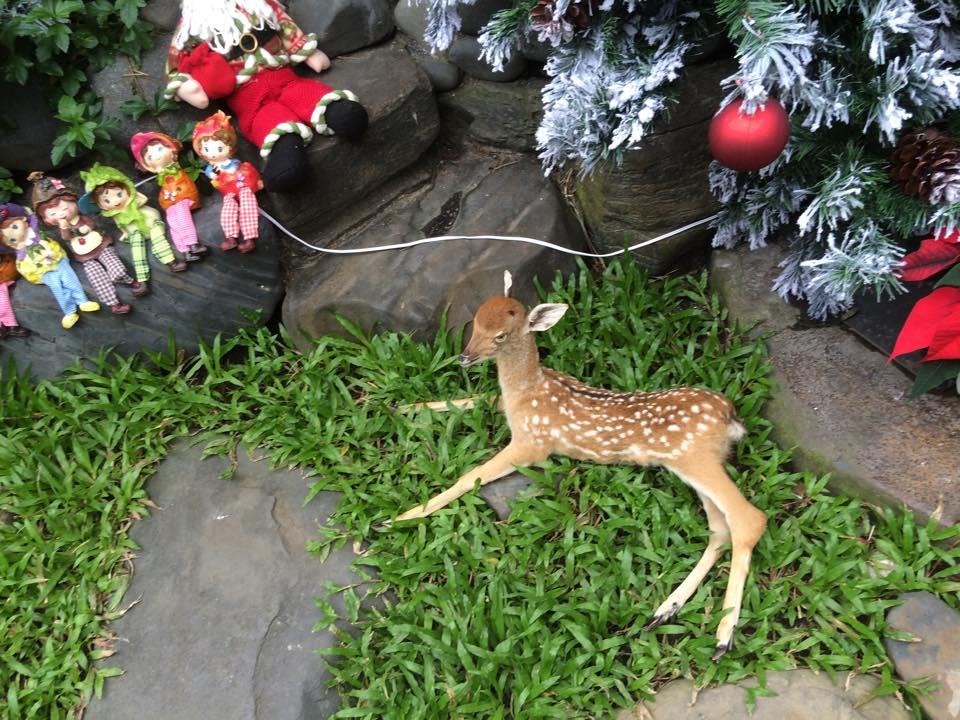 Noel 2014 lung linh, huyền ảo trong căn nhà triệu đô của Đàm Vĩnh Hưng - Ảnh 6