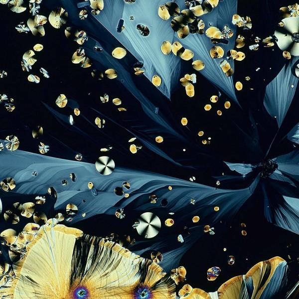 Cận cảnh cơ thể người tuyệt đẹp qua lăng kính hiển vi - Ảnh 5