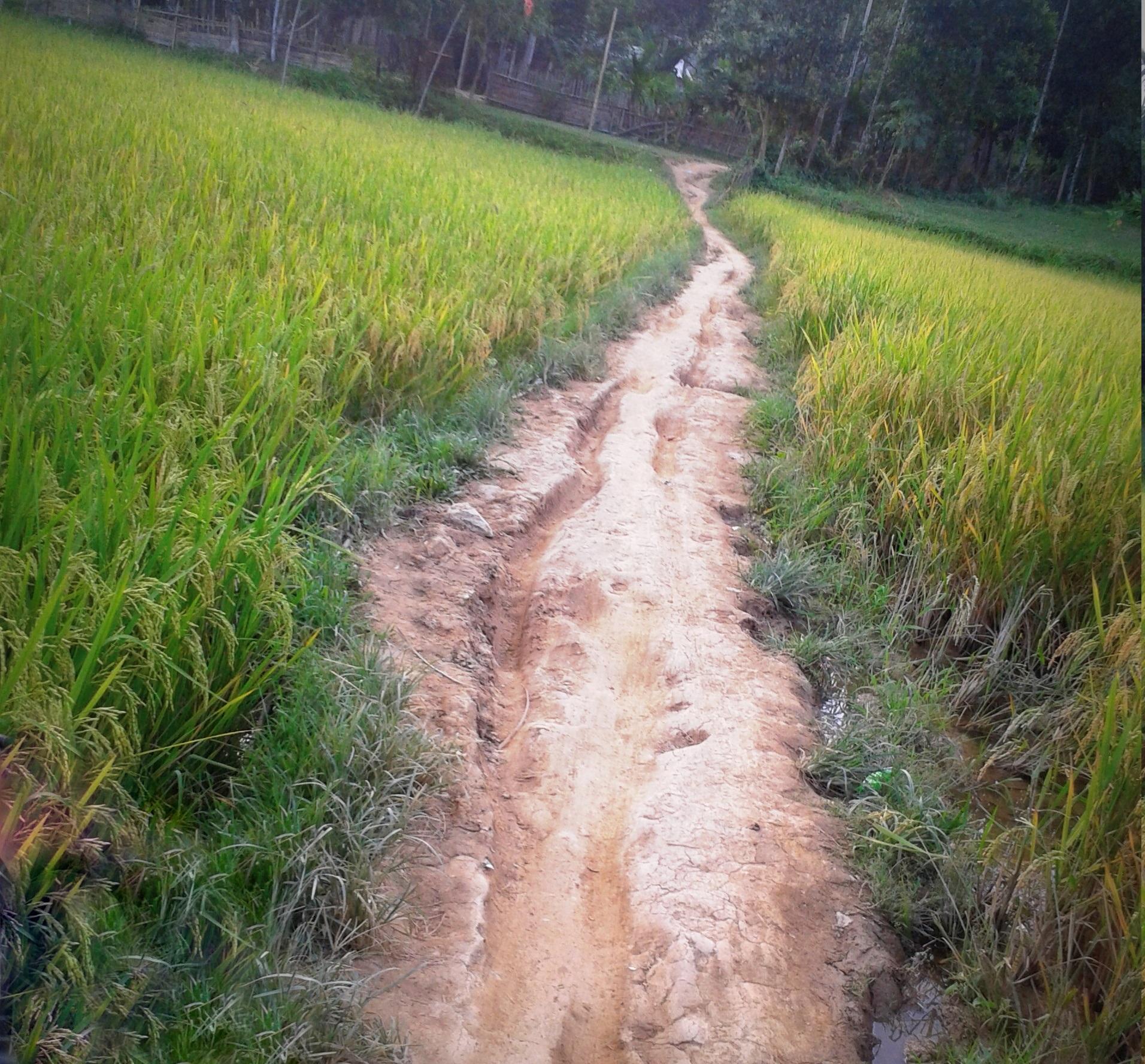 Bản làng vùng cao khao khát một con đường - Ảnh 1