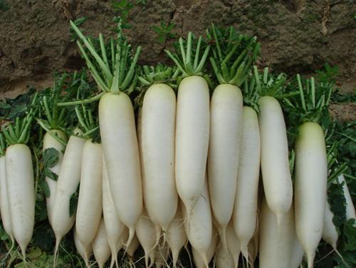 Tăng khả năng miễn dịch trong mùa đông bằng rau xanh - Ảnh 2