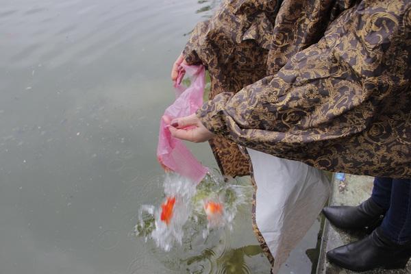 Hà Nội: Người dân đội mưa đi thả cá chép vàng tiễn ông Táo - Ảnh 2