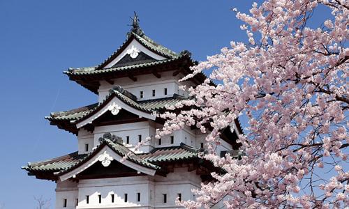 Kỳ 1: Sự thật du học Nhật Bản vừa học vừa làm thu nhập khủng - Ảnh 1