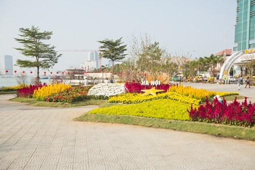 Ngắm bản đồ Việt Nam bằng hoa lớn nhất bên sông Hàn  - Ảnh 3