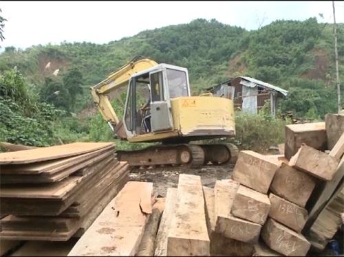 Clip: Hàng chục mét khối gỗ chôn gần xưởng mộc - Ảnh 1