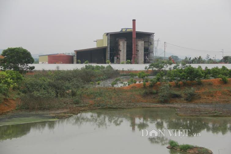Vụ cá chết trên sông Bưởi: Đình chỉ hoạt động 6 tháng đối với Cty nhà máy đường - Ảnh 1