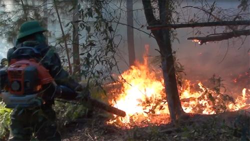 Liên tục xảy ra cháy rừng do nắng nóng ở Nghệ An - Ảnh 1