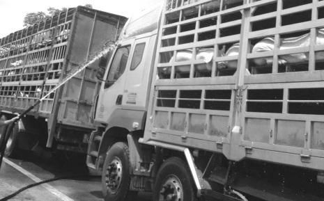 Dịch vụ tắm lợn và đường đi của thịt lợn chết vào mâm cơm người lao động  - Ảnh 1