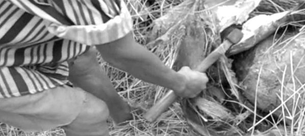 """Đổ xô nuôi đuông làm """"thần dược"""", vườn dừa có nguy cơ bị… xóa sổ - Ảnh 1"""