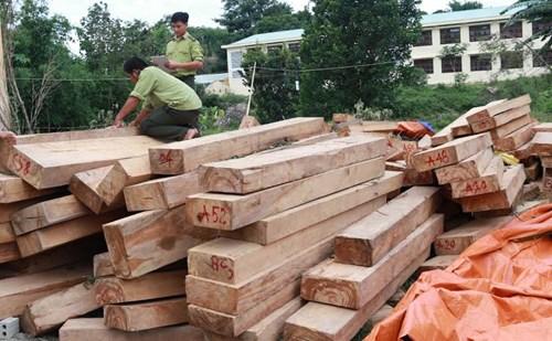 Công bố kết quả điều tra vụ phá rừng pơ mu ở Quảng Nam - Ảnh 4