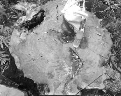 """Đắk Lắk: Thâm nhập vườn Quốc gia Chư Yang Sin nơi """"máu rừng vẫn chảy""""  - Ảnh 2"""