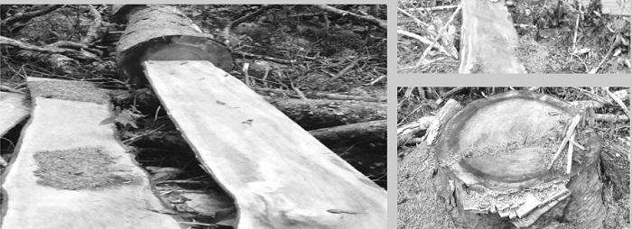 """Đắk Lắk: Thâm nhập vườn Quốc gia Chư Yang Sin nơi """"máu rừng vẫn chảy""""  - Ảnh 1"""