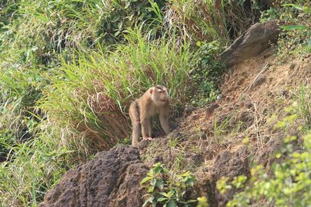 Truy tìm nguồn gốc con khỉ 'thích' tấn công phụ nữ ở Đà Nẵng - Ảnh 1