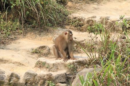 Truy tìm nguồn gốc con khỉ 'thích' tấn công phụ nữ ở Đà Nẵng - Ảnh 2