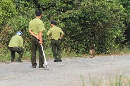 Truy tìm nguồn gốc con khỉ 'thích' tấn công phụ nữ ở Đà Nẵng - Ảnh 3
