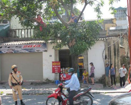 """Hà Nội: Gặp người phụ nữ từng """"cố thủ"""" trên cây phản đối chặt hạ - Ảnh 1"""