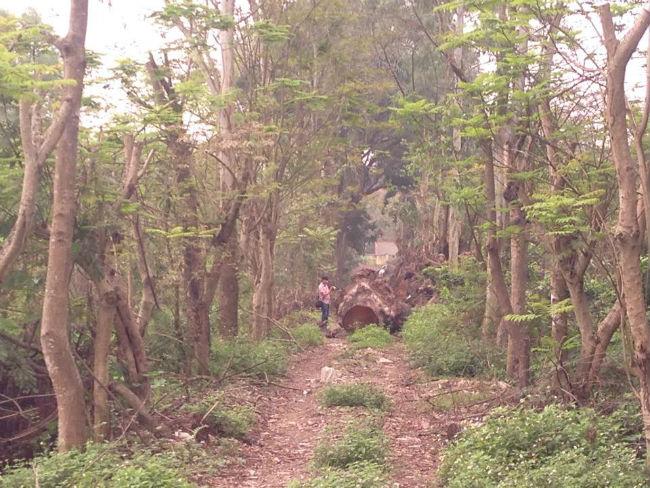 Cận cảnh bãi tập kết cây xanh vừa bị chặt ở Hà Nội - Ảnh 1