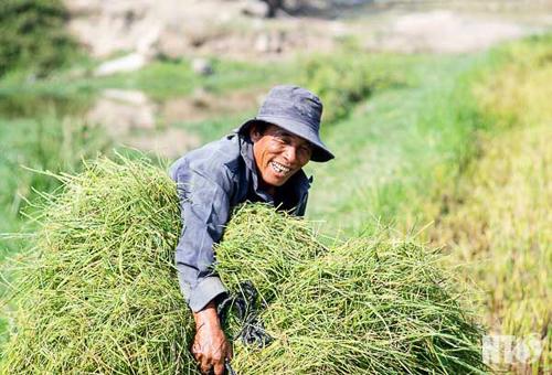 Hình ảnh khiến ai cũng xót xa về Ninh Thuận trong đợt hạn hán khốc liệt - Ảnh 11