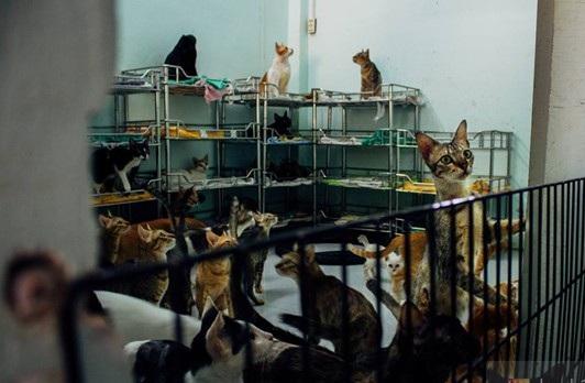 'Ông Tây' thuê nhà trọ để nuôi hàng trăm chú chó, mèo bị bỏ rơi - Ảnh 2