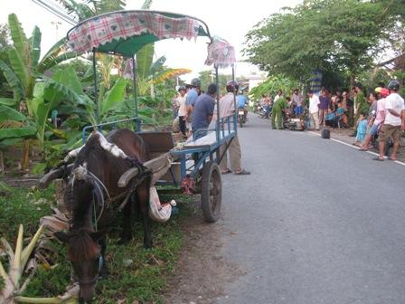 Định tội cho con ngựa kéo xe gây tai nạn chết người ở Tiền Giang - Ảnh 1