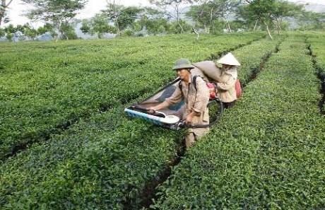 Sắp xếp, đổi mới các công ty nông, lâm nghiệp tỉnh Quảng Ngãi - Ảnh 1
