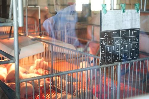 Công ty CPV giới thiệu hệ thống kiểm soát sản xuất thịt heo khép kín - Ảnh 2