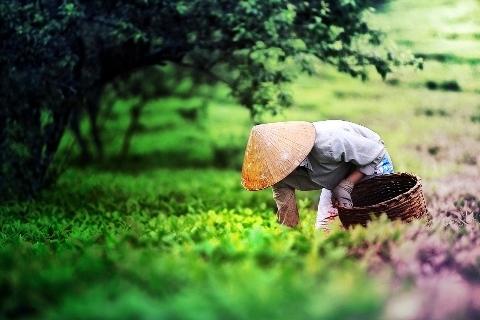 Sắp xếp, đổi mới công ty nông, lâm nghiệp 4 tỉnh Tây Nguyên - Ảnh 1