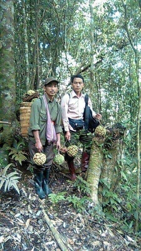 Cận cảnh quả na rừng 5 kg giá nửa triệu đang gây sốt - Ảnh 3