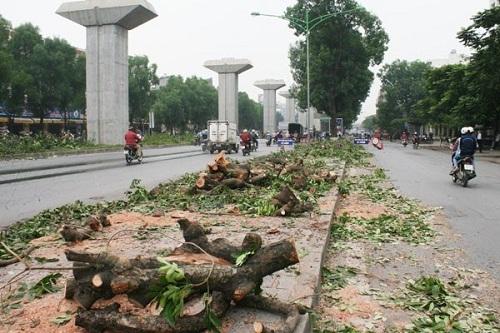 """Chặt 6700 cây ở Hà Nội: Đại gia """"khóc ròng"""" vì bỏ tiền mua... oan ức? - Ảnh 1"""