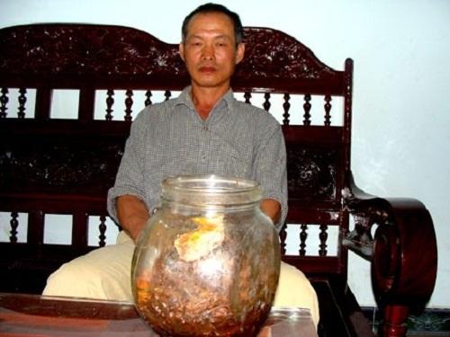 Sâm 800 tuổi đại gia thế giới thèm thuồng, lão nông Việt ngâm rượu... uống chơi - Ảnh 1