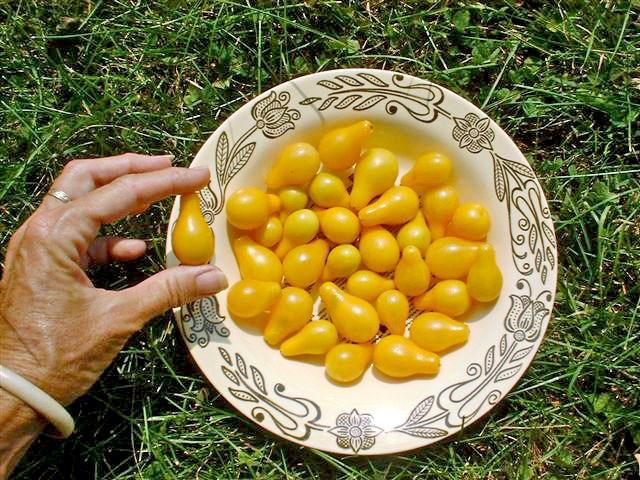 Cận cảnh giống cà chua lê khiến bà nội trợ mê mẩn - Ảnh 16