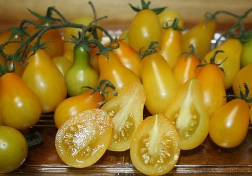Cận cảnh giống cà chua lê khiến bà nội trợ mê mẩn - Ảnh 6