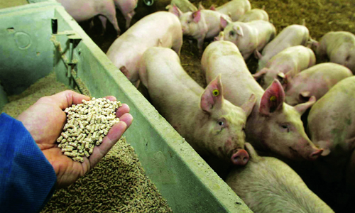 Từ năm 2018 cấm sử dụng kháng sinh trong chăn nuôi - Ảnh 1