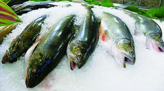 Mẹo đơn giản phân biệt cá biển chết với cá biển đông lạnh an toàn - Ảnh 1