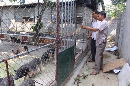 Anh thợ điện đổi đời nhờ nuôi lợn bằng thảo dược - Ảnh 2