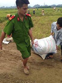 CSGT, bộ đội ngâm mình dưới nước vớt lúa giúp dân gây bão mạng - Ảnh 4