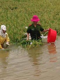 CSGT, bộ đội ngâm mình dưới nước vớt lúa giúp dân gây bão mạng - Ảnh 5