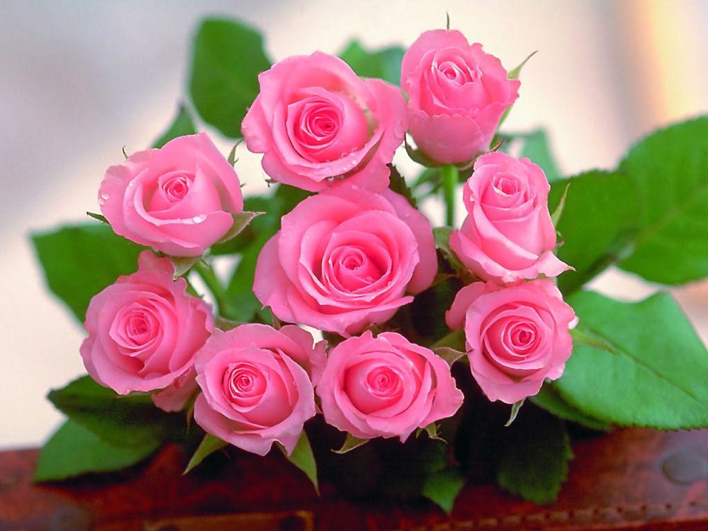 Ý nghĩa những loài hoa tặng mẹ nhân ngày Phụ nữ Việt Nam 20/10 - Ảnh 2