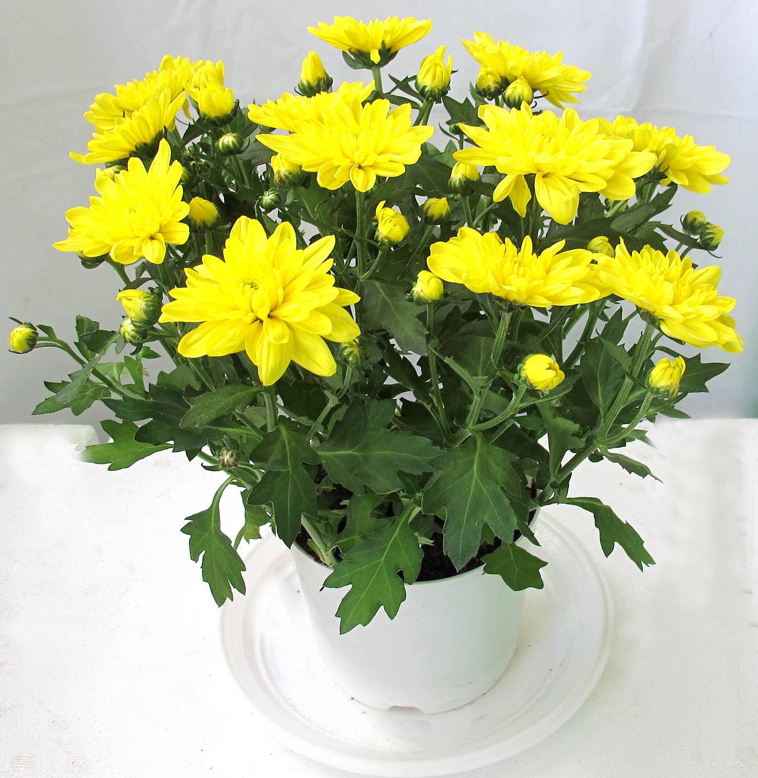 Ý nghĩa những loài hoa tặng mẹ nhân ngày Phụ nữ Việt Nam 20/10 - Ảnh 9