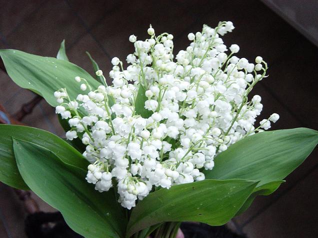 Gợi ý hoa tặng người yêu nhân ngày 20/10 - Ảnh 4