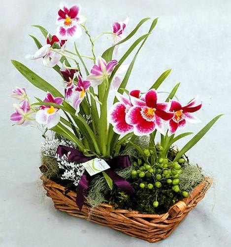 Gợi ý hoa tặng người yêu nhân ngày 20/10 - Ảnh 6