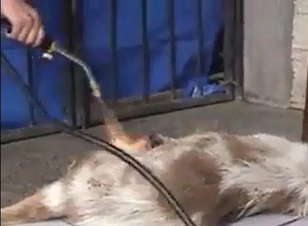 Phẫn nộ hot girl độc ác dùng khò thiêu sống một chú chó - Ảnh 3