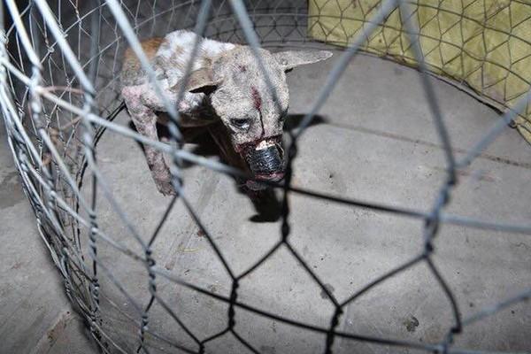Cư dân mạng cứu chú chó bị hoại tử miệng vì bị dán băng dính - Ảnh 3