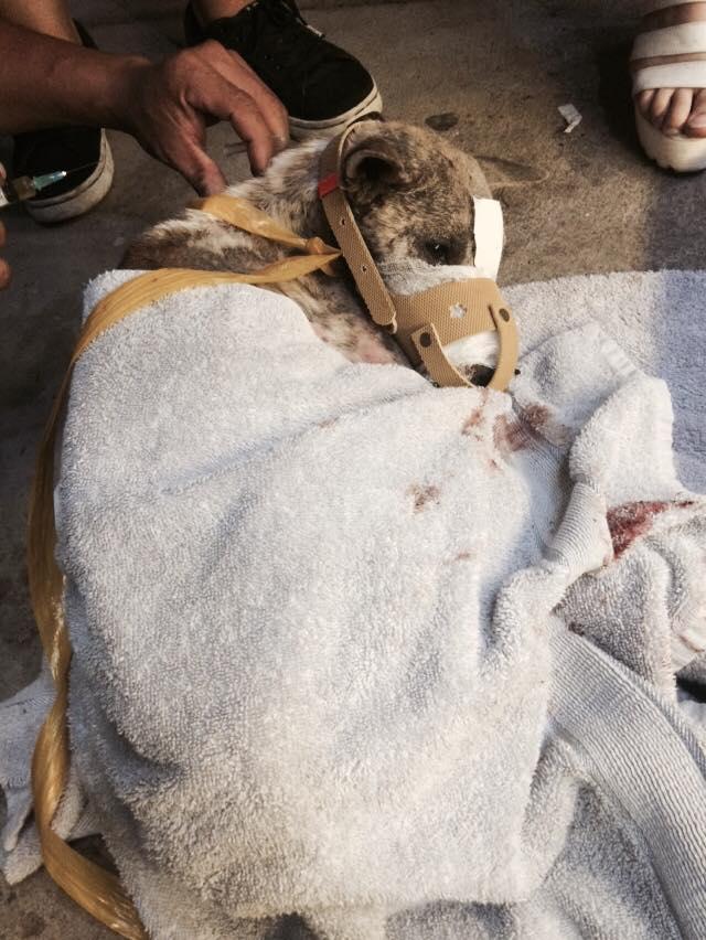 Cư dân mạng cứu chú chó bị hoại tử miệng vì bị dán băng dính - Ảnh 5