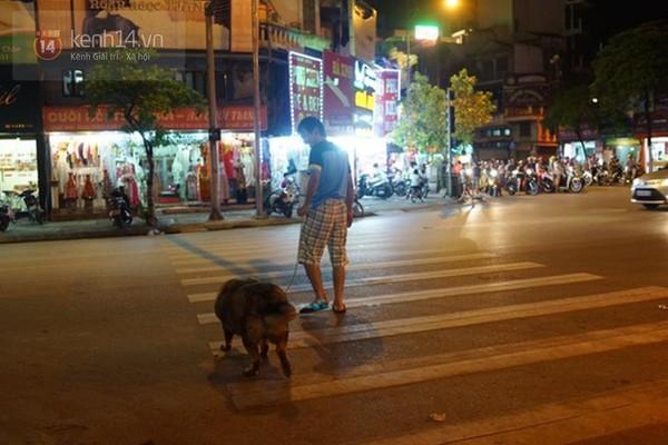 Chú chó béo nhất Hà Nội hàng ngày đi bộ để... giảm cân - Ảnh 2