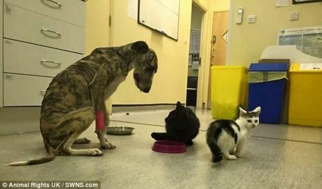 Thêm trường hợp chú chó bị buộc chặt mõm - Ảnh 2
