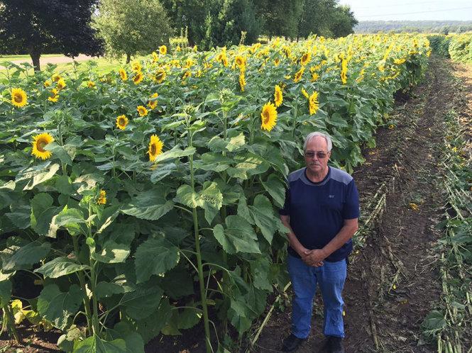 Tự tay trồng cả cánh đồng hoa hướng dương để tưởng nhớ vợ - Ảnh 2