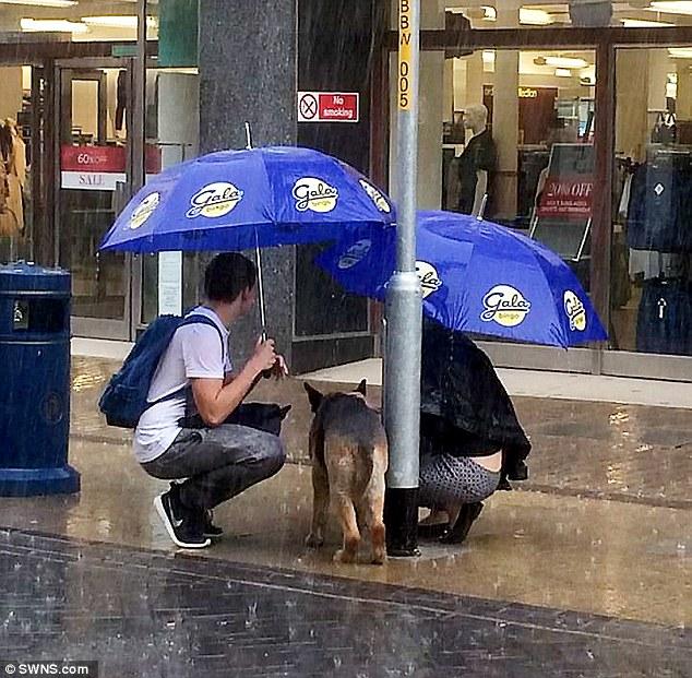 Xúc động bức ảnh cặp đôi cởi áo khoác che mưa cho chú chó lạ - Ảnh 2