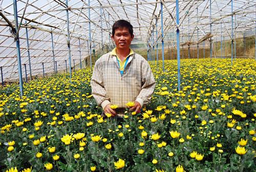 'Hải Kim Cương', ông chủ vườn cúc tiền tỷ đất Lâm Đồng - Ảnh 1